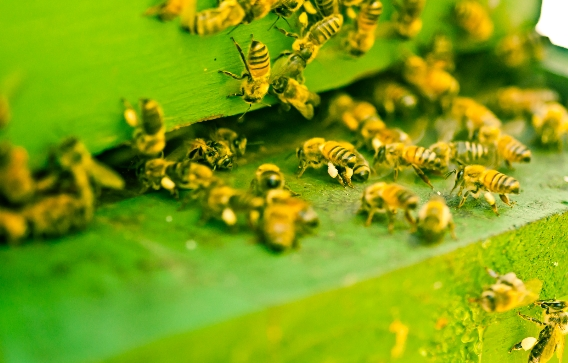 """Study warns US farmland is now 48 TIMES more TOXIC to insects: Are neonicotinoids to blame for the impending """"insect apocalypse?"""""""