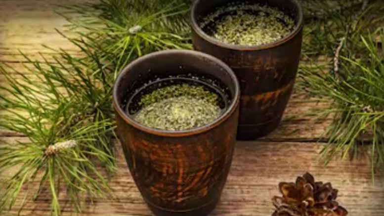 Is pine needle tea the answer to covid vaccine shedding / transmission? Learn about suramin, shikimic acid and how to make your own extracts