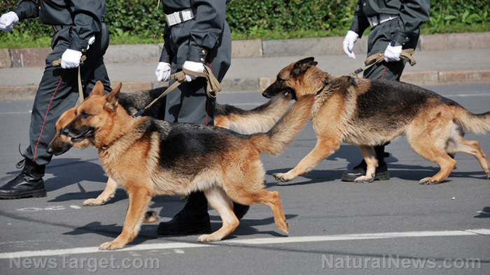 """Media says dogs can sniff covid on a person – can they also identify vaccinated people who are """"shedding?"""""""